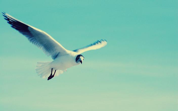 flying-bird-1246862