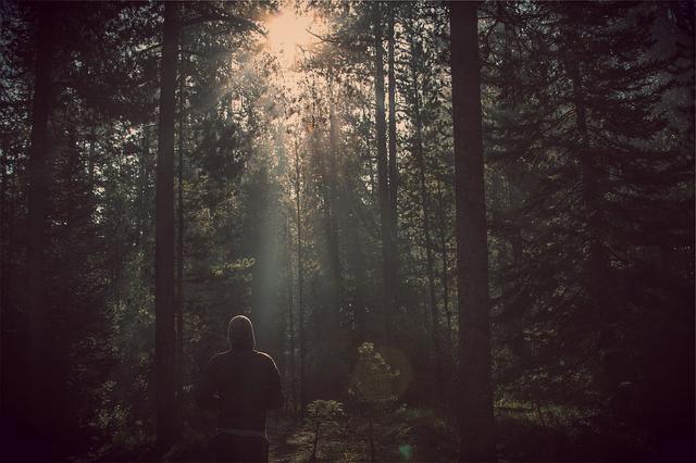 bosco con luce in fondo